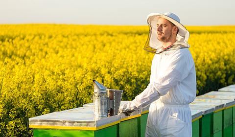 Istorie apicultor 1