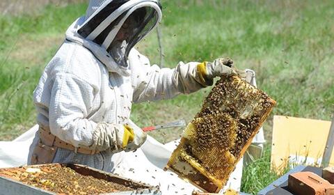 Istorie apicultor 2
