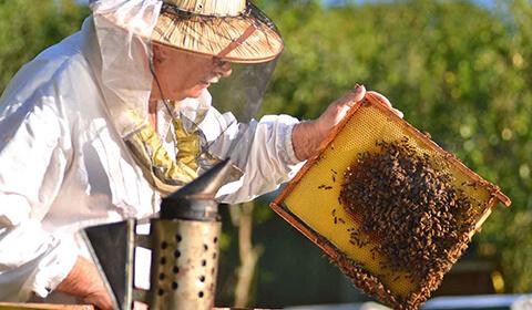 Istorie apicultor 3