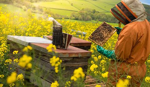 Istorie apicultor 4
