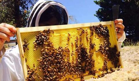 Istorie apicultor 6