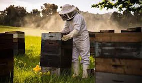 Istorie apicultor 7