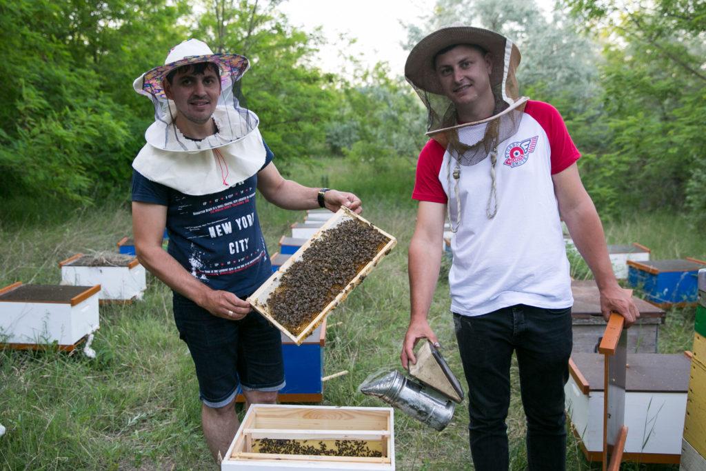 """Albinele de la Bașcalia se vor """"vedete"""" în Europa (Video)"""